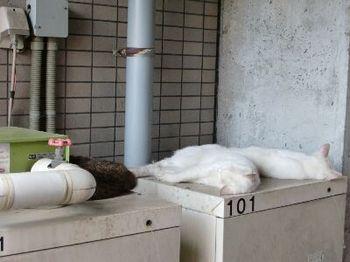 ネコの避暑地.jpg