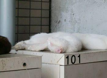 ネコの避暑地2.jpg