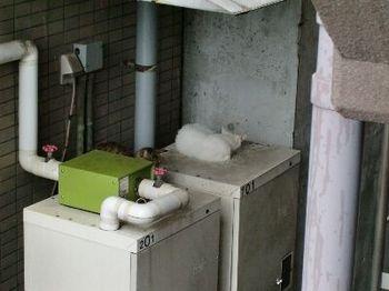 ネコの避暑地3.jpg